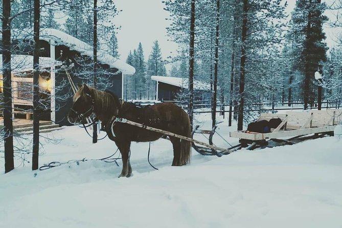 Transfer to Polaris Point Horses