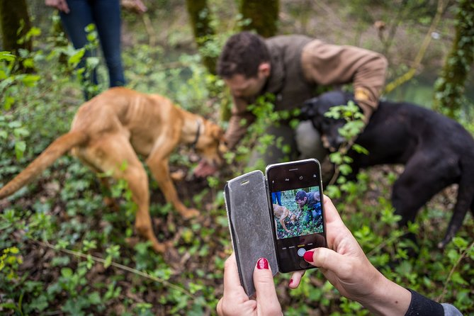 Truffle hunting experience with light lunch and olive oil tasting