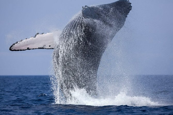 Whale Watching Boat Tour from Balapitiya