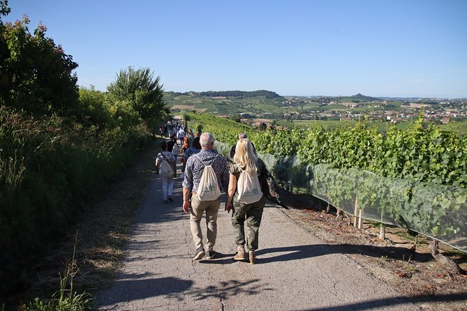 Tour of Castagnole Lanze with Wine Tasting and Picnic