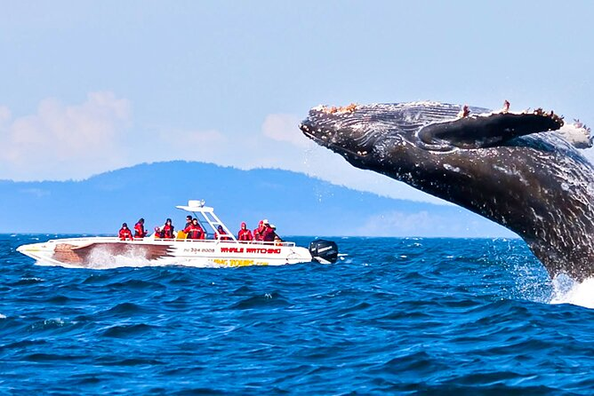 Whale Watching Boat Tour from Koggala