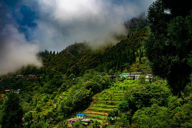 Tiger Hill Nature Walk (3 Hours Guided Trekking Experience)