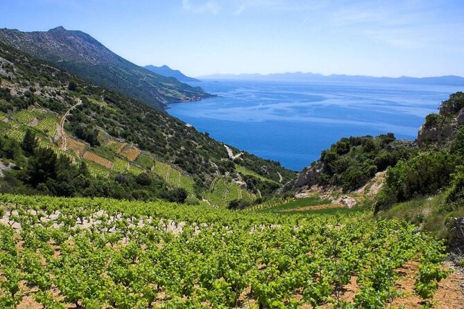 Private tour Pelješac - oysters and wine, a match made in heaven
