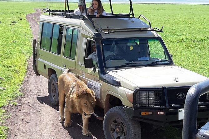 8 Days - Private Tour Ngorongoro, Serengeti, Manyara and Tarangire