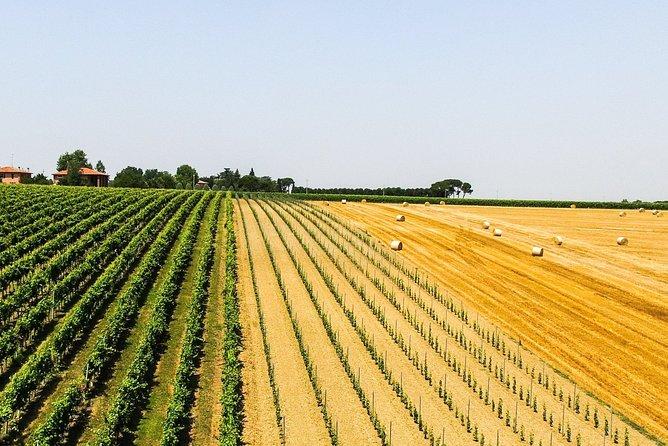 Through 3 generations - visit and tasting at Merlotta wines