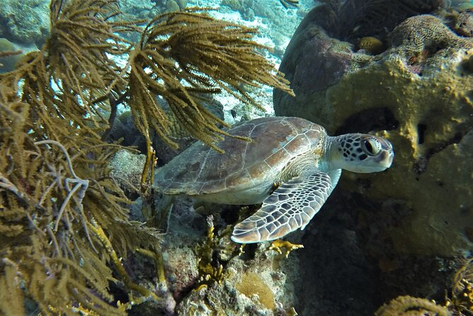 Private Klein Bonaire Snorkel tour with local guide.