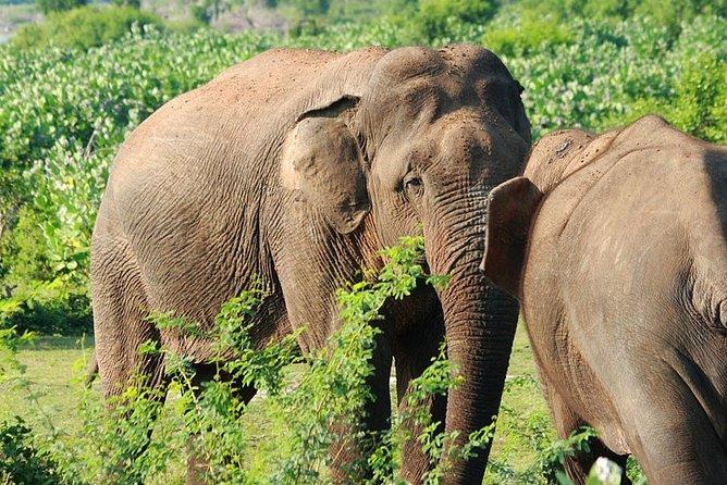 03 Day Tour to Wasgamuwa From Kandy