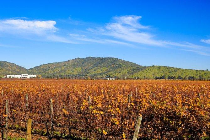 Casablanca Valley Wine Tour from Santiago