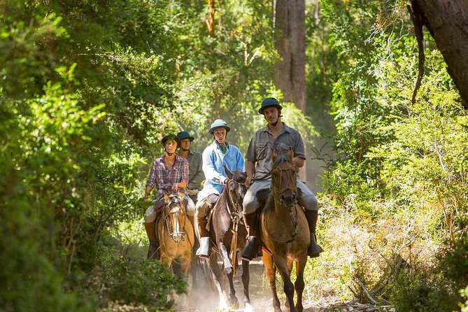 ENJOY the Jungle Park with Horseback Riding with ATV, zip lines and cenote