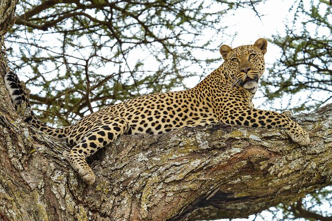 4 Day Tour to Lake Manyara, Ngorongoro Crater and Tarangire