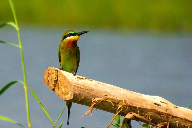 Birdwatching Boat Ride in Muthurajawela Marsh