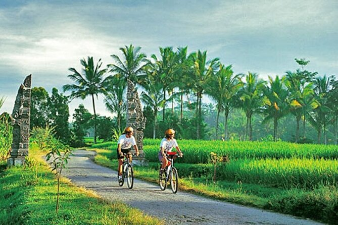 Cycling and Rice plantation