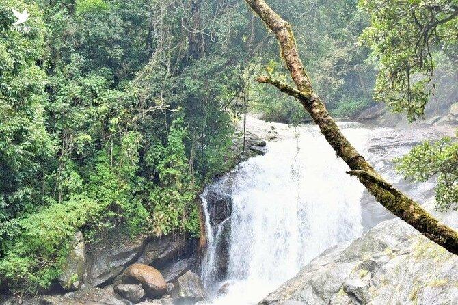 Nature Trail At Munnar
