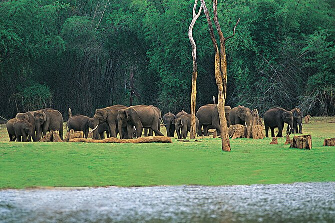 Nature and Cultural Trail At Thekkady