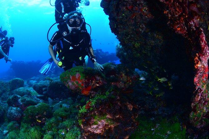 Diving Experience in Fernando de Noronha