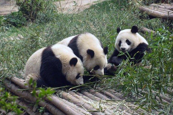 Chengdu Muslim Day Trip: Panda Breeding Base, Mosque, Wuhou Temple & Jinli