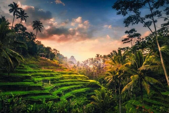 Full-Day Ubud Private Tour