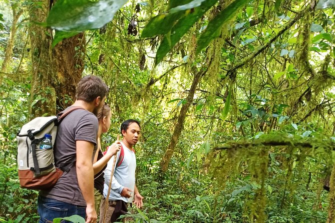 Bali pure nature: waterfall, jungle hike & canoe trip