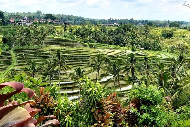 Jatiluwih Rice Terrace and Tanah Lot Sunset Tour