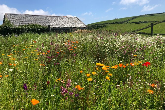 Healing Gardens and Herbs of the Isle of Man (small group up to 10 guests)