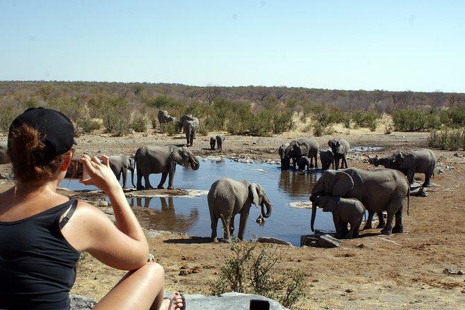 3 Day Etosha Express Camping Safari from Windhoek