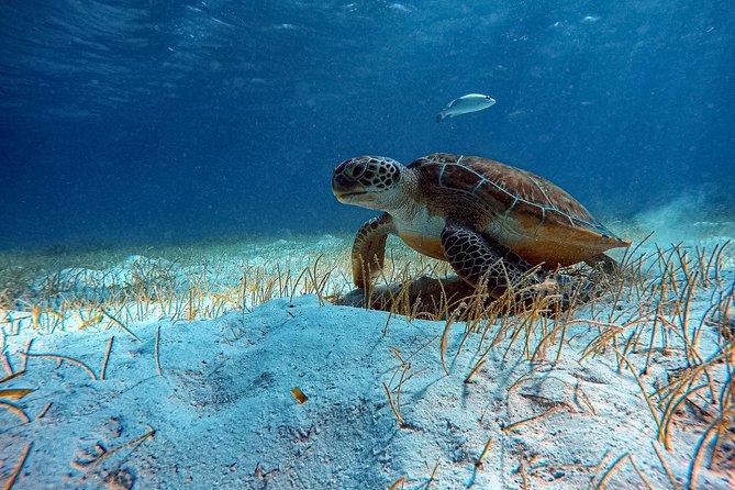 3-Tank Scuba Diving Ambergris Caye