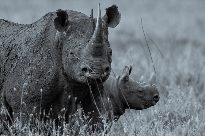 3 days Safari, Serengeti National Park and Ngorongoro Crater