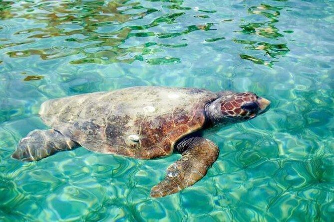 Discover Scuba Diving Resort Course