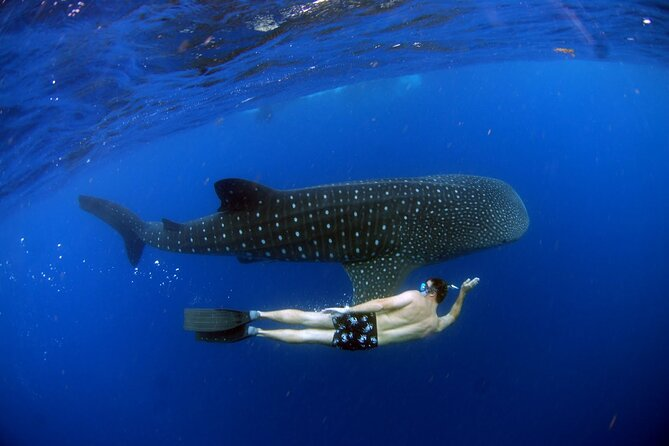 LIVE the experience of Swim with the Whale Shark. Transport,Snack and Boat Ride