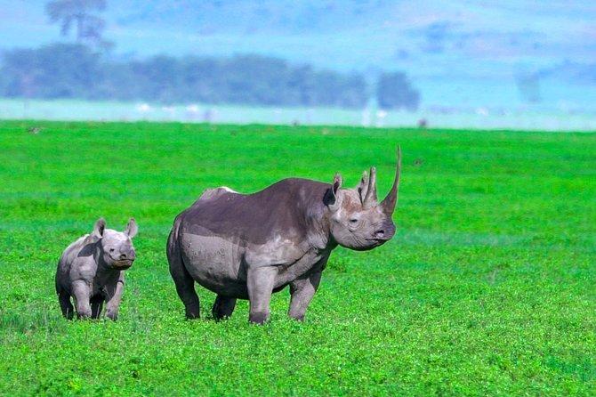 Ngorongoro Crater Private Safari | Full Day + Lunch