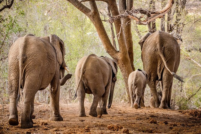 3 Day Kruger National Park Safari