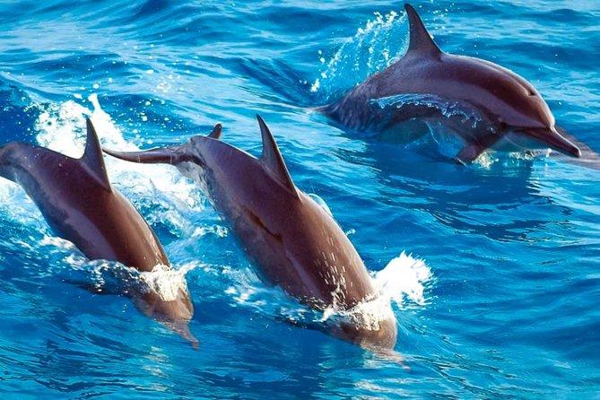 Dolphin and Jozani Forest National Park in Zanzibar