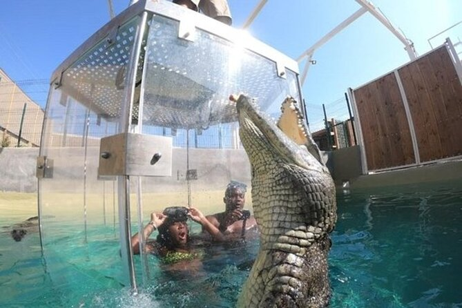 Crocodile Cage Diving Experience in Cabo San Lucas
