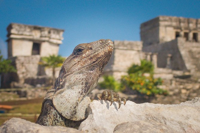 Tulum and Extreme Ride from Cancun