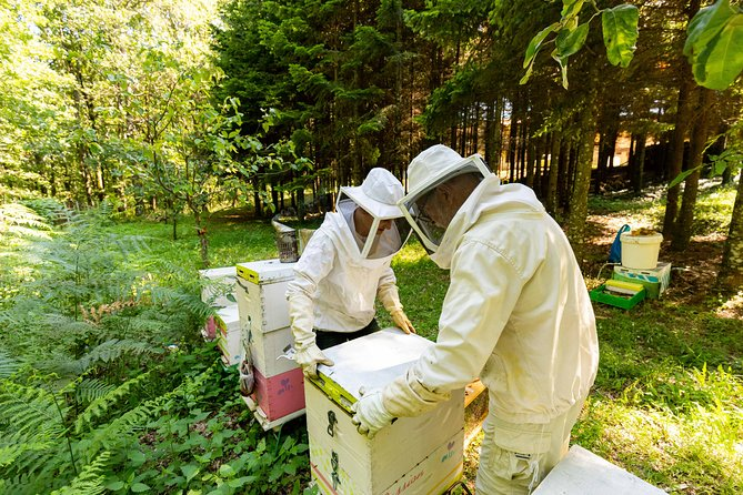 Beekeeper Experience in the Mountain of Holomontas