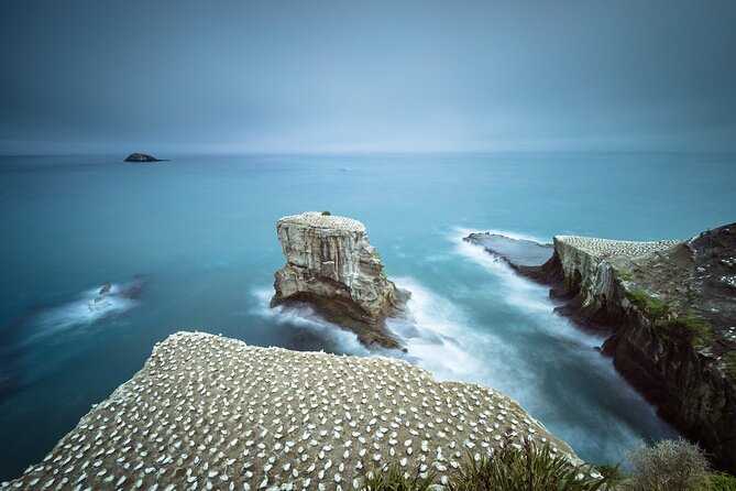Muriwai Scenic Gannet & Wine Experience