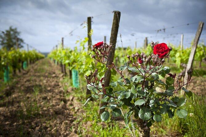 Bordeaux Organic & Biodynamic Wine Experience Private Tour