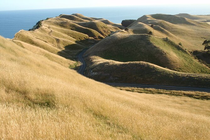 Cape Kidnappers Experience - Overnight [3 Day Tour]