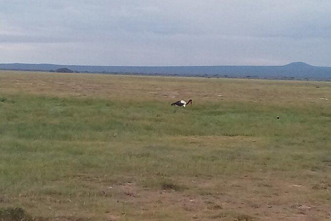 6 Days Birdwatching, Lake Baringo, kakamega Forest.