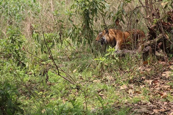 Parsa Wildlife Reserve Tour From Kathmandu