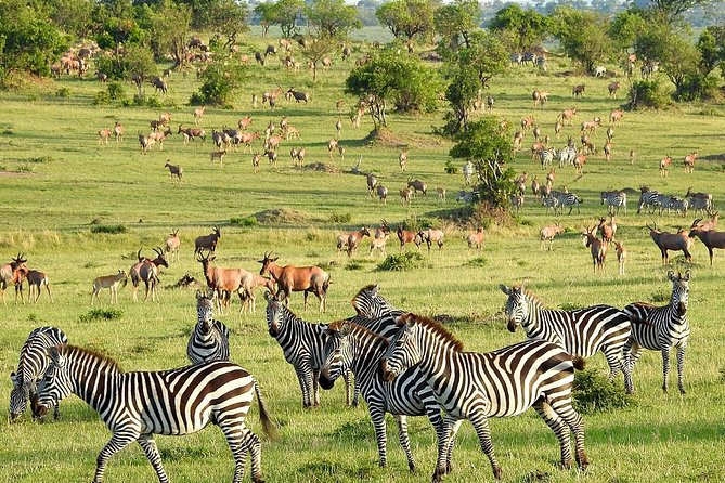 Epic Serengeti National Park (3days)