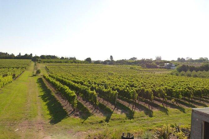 Wine tasting - Uruguayan Tannat in Montevideo