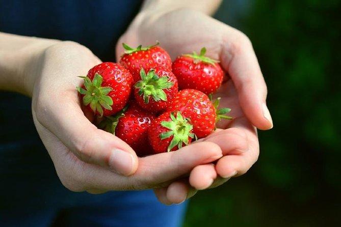 Strawberry Route