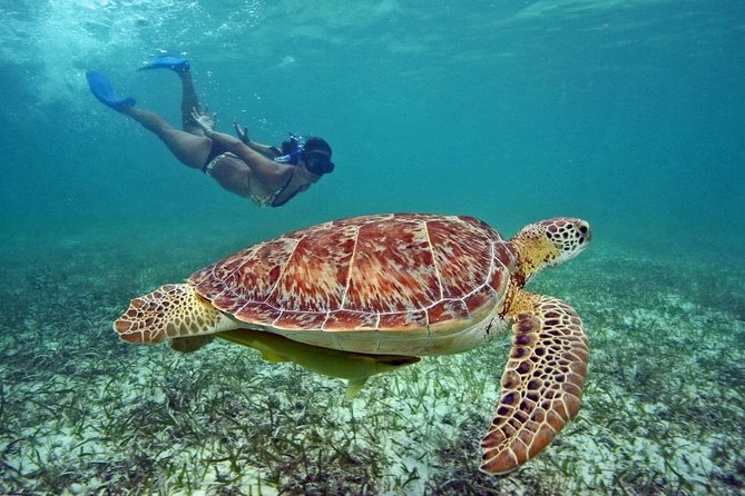 Swim with turtles in Akumal and cenotes by Live Caribe Now