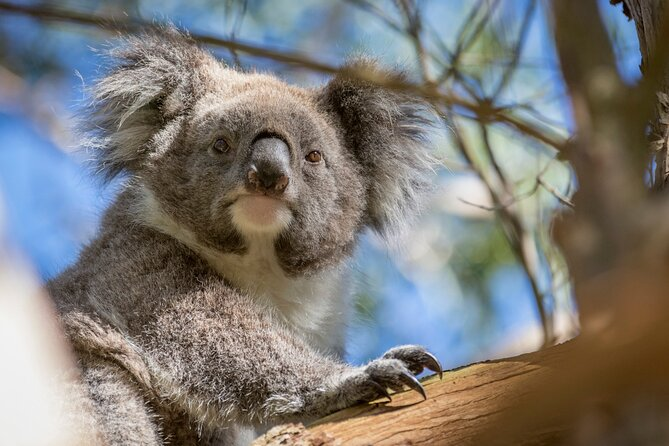 Melbourne Short Break Holiday to the Great Ocean Road & Grampians 3 Day Escape