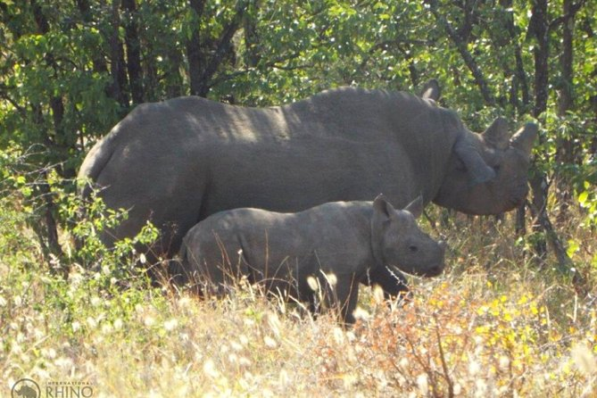 Guided Falls Tour, African Village Tour & Night Game Driver with Bush dinner