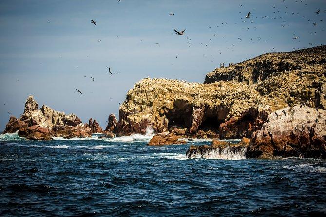 Tour to Paracas National Reserve