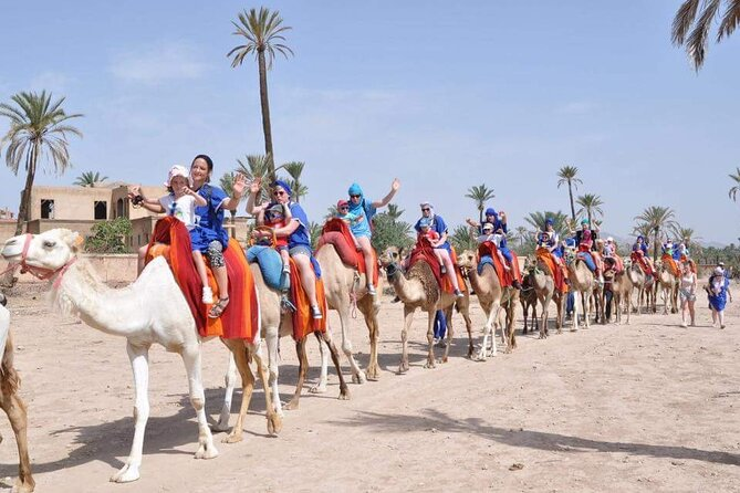 Marrakech Camel Riding Experience