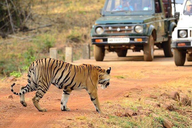 Nagpur to Vizag Tribal Villages & Tiger Safari
