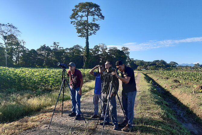 Private Arenal Birdwatching Experience